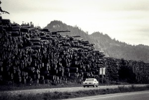Giant walls of redwood timber along the highway in Washington State, USA. This area is home to the tallest trees in the world. The scale of forestry operations here is vast.
