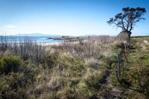 Shed on the Shore, East Coast of Tasmania.