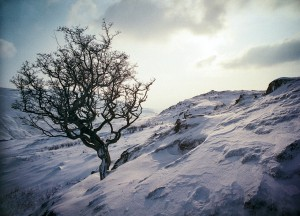 Tree in the frozen landscape of Cumbria's Lake District in Northern England.